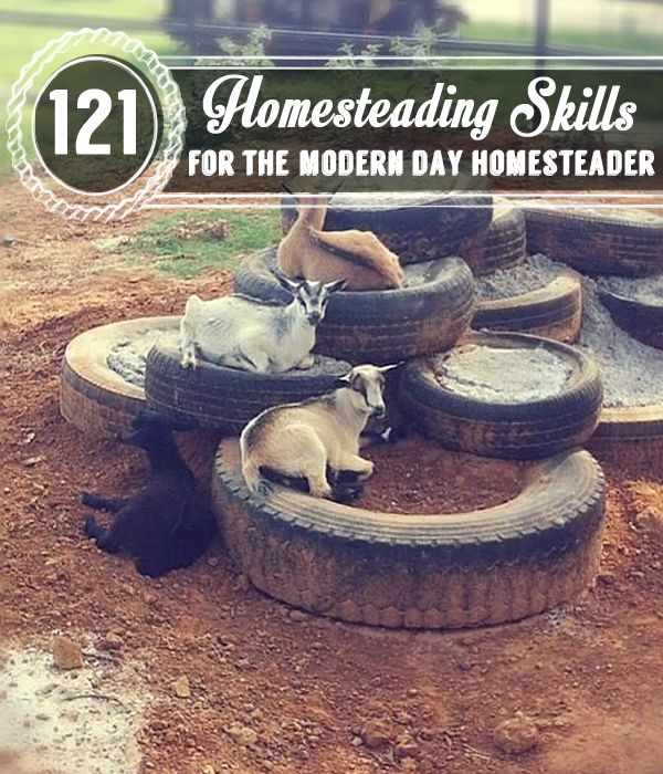 121 Homesteading Skills for the Modern Day Homesteader -- or Things My Ancestors Had to Know to Survive.
