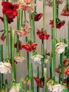 mooie bloemen, simpel eenvoudig, less is more!