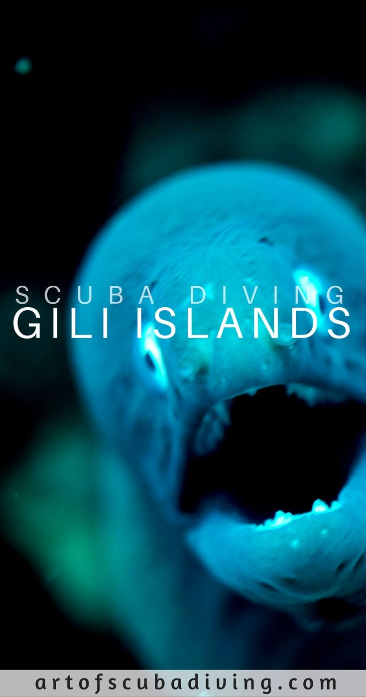 #scuba #diving #travel #snorkeling #swimming #ocean #sea #sharks #fish #underwater #indonesia #gili #island