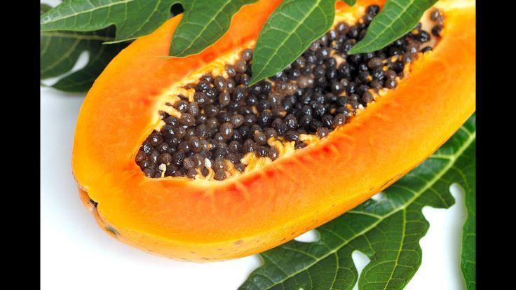 Выращиваем папайю из семян. Способ № 1