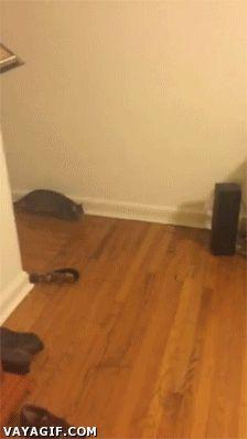 rebloggy.com post gif-cat-gatos-saltos-abrazar-gatitos-abrazos-acrobacia-gatoas-saltarines-amigos 103577485903