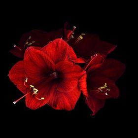 Magda Indigó / egzotikus virágok