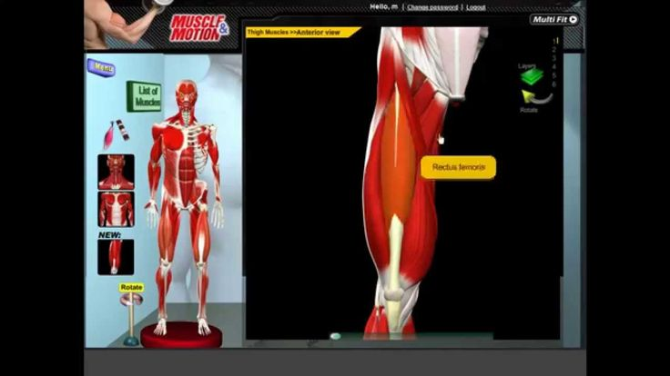 Muscular Anatomy, Origin Insertion & Movements!