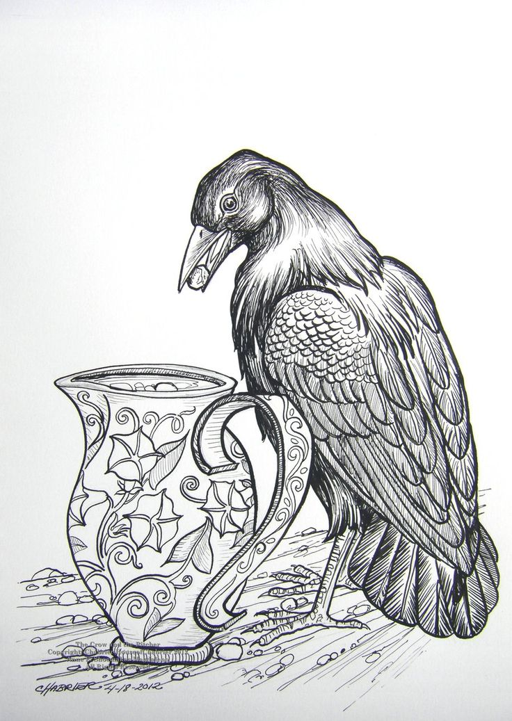 coloring pages of a crow - photo#47