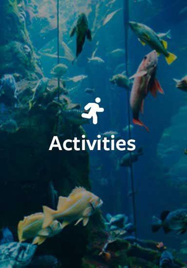 Activities in Nova Scotia, New Brunswick & Prince Edward Island