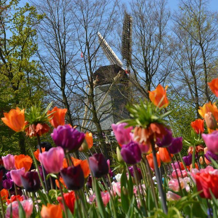 O maior parque de flores do mundo - Keukenhof - Dicas de como chegar e quando ir.