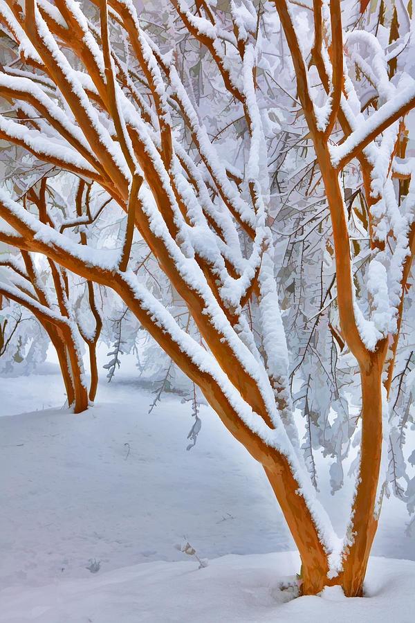 Snow Wonderful Snow  ♥ ♥ www.paintingyouwithwords.com