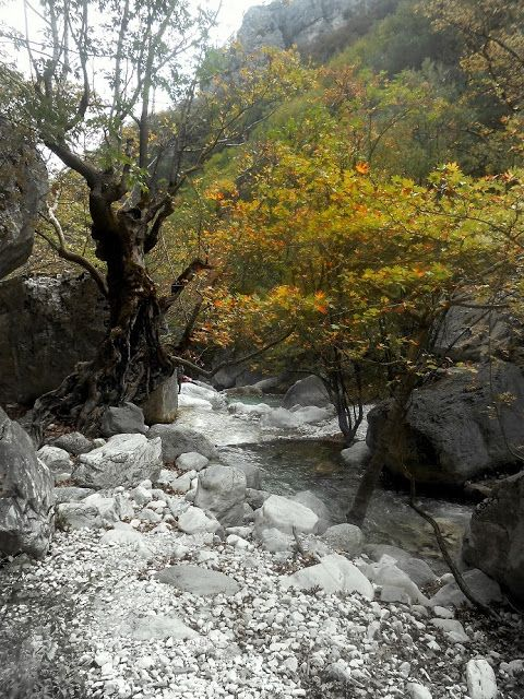 st.nicolaos stream aridaia - greece by jwp