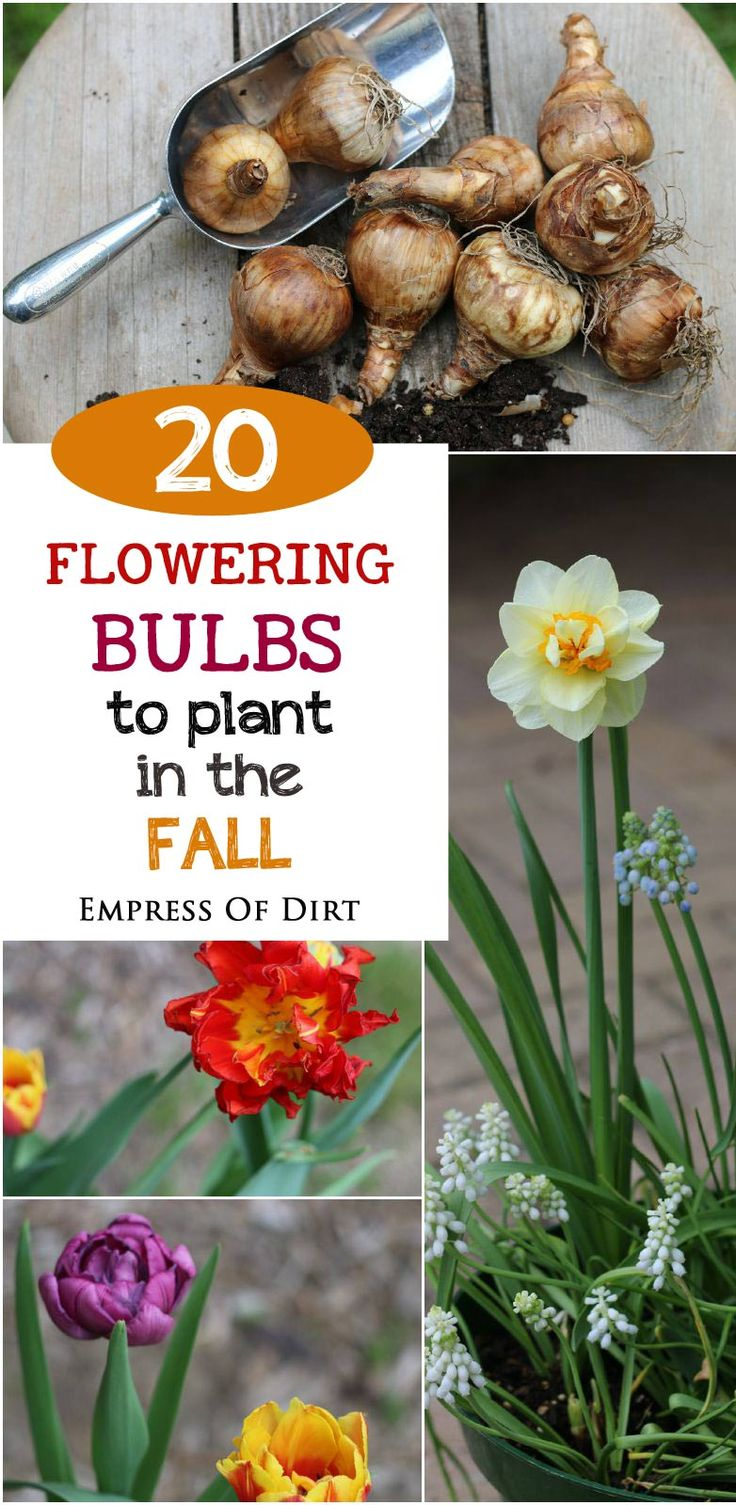 14 best images about fall winterization tips for flower beds on