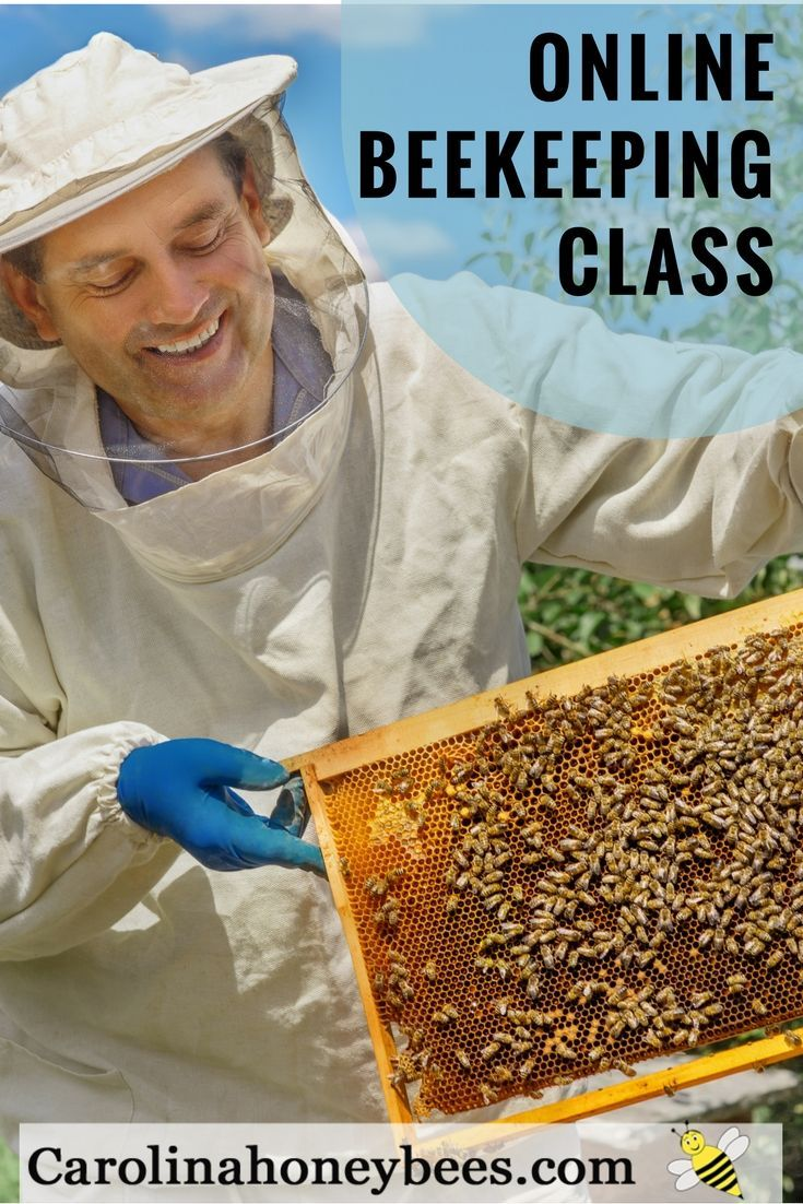 1009 best beekeeping tips and tricks images on pinterest bee