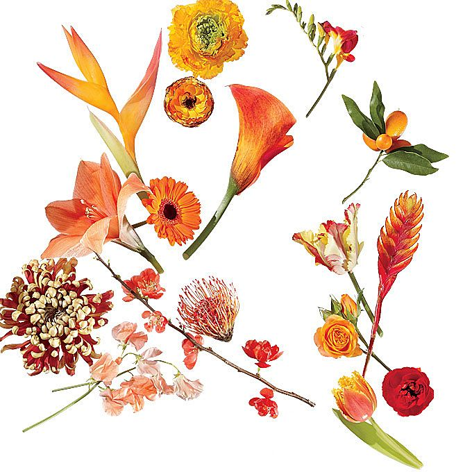 Brides.com: A Glossary of Wedding Flowers by Color. Click through to see our favorite flowers available in this spectrum—from coral to orange. Great reference