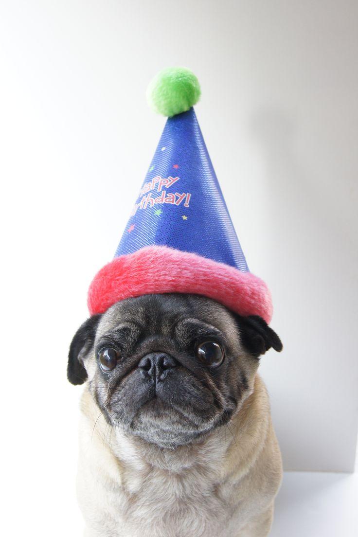 Любви мужчине, картинки мопсы с днем рождения