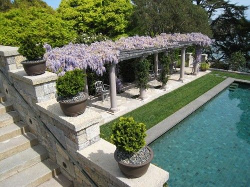Pool pergola with wisteria