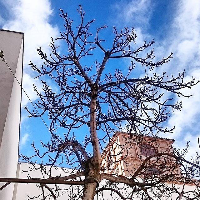 El árbol de la vida.... #picoftheday #tree #museopicassomalaga #fotografiacontemporanea #vidproject
