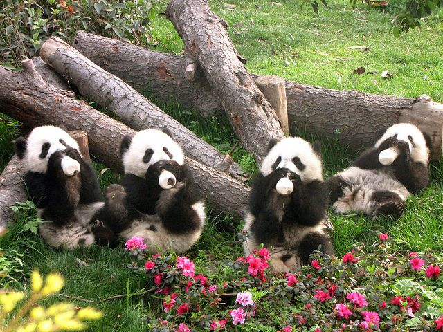 Wolong National Nature Reserve, China--- this is at the top of my bucket list. Would love to take the kids here.