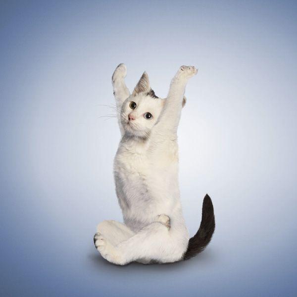 Cute Yoga Kittens - My Modern Metropolis