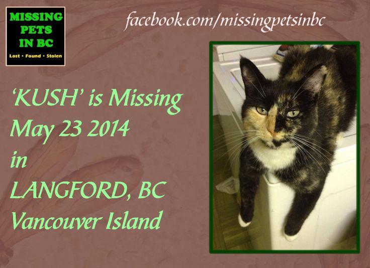'KUSH' MISSING FEMALE CAT in LANGFORD, BC (Veteran's Memorial Park & Royal Colwood Golf course area) MAY 23 2014