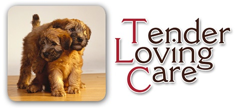 Tender Pet Relocation, Careful Pet Shippers, Pet Transport Services US.  ---  A way to get your rescued pet home!!  :0)
