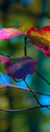 the beautiful colors of nature