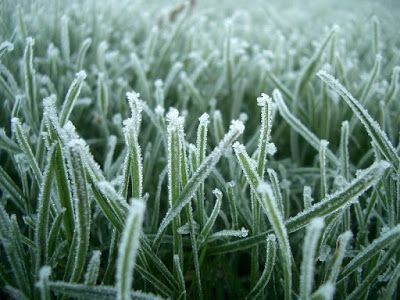 """Phil Hey: """"Spring forward, fall back"""" Tell time now by the frost-stiff grass and how beneath shod feet it cracks and heaves; by the curled leaves skating on their edges in the street..."""