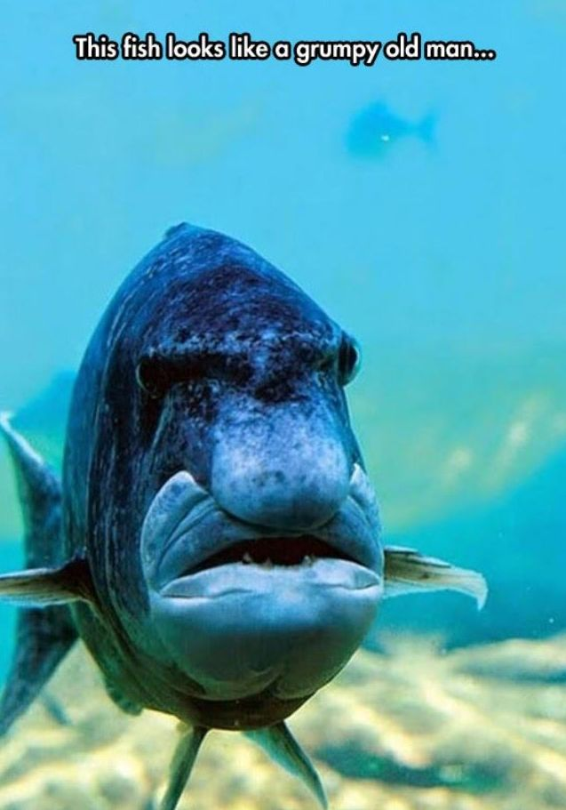 Grumpy old man fish