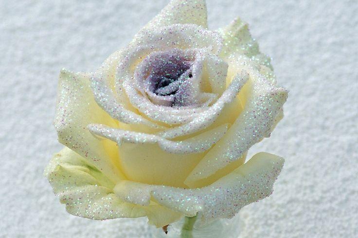 bling bling paarse roos http://www.regioboeket.nl/vip-roses/product/bling-bling/bling-bling-paarse-rozen