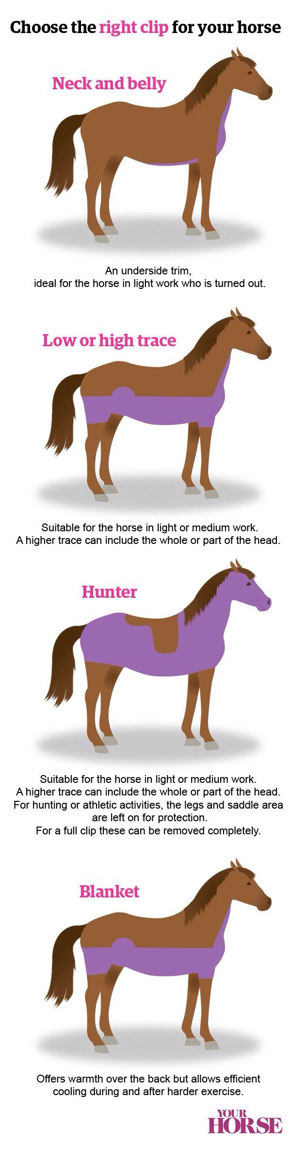 Choosing The Right Clip For Your Horse