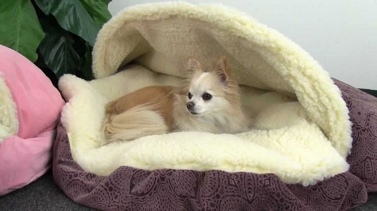 DIY Dog Bed Project: How to Make a Homemade Dog Bed                                                                                                                                                      More