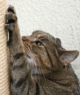 Советы из моего личного опыта на о том, как я приучила котенка к когтеточке за короткий срок. Повторить будет очень просто.