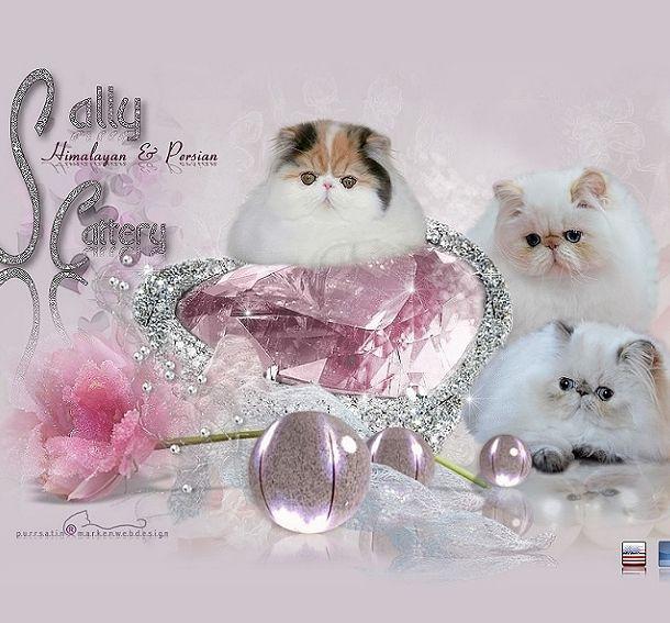 Rosemoon Style von Purrsatin Webdesign