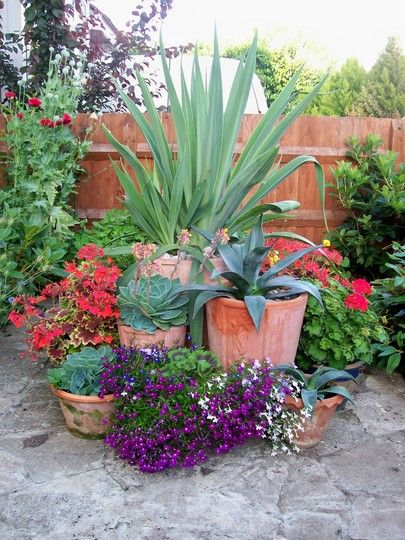 Different heights and textures in terracotta pots; from the sculptured spikes of succulents to the soft spilling flowers.
