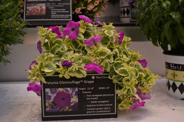 Hanging Flower Baskets Canadian Tire : Best images about awesome annuals on window