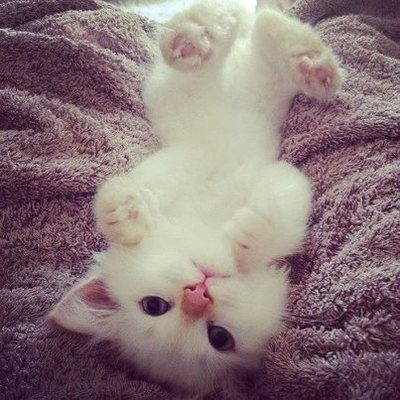 Adorable white kitten staring, Click the pic for more :)