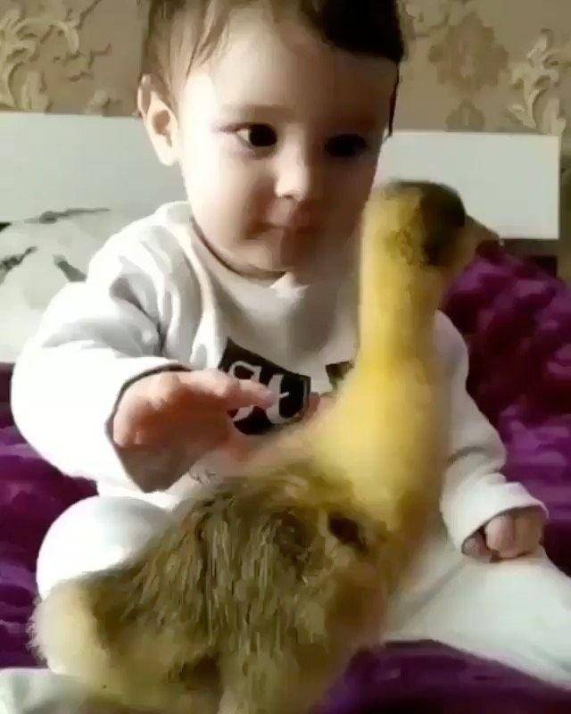 7 769 Curtidas 65 Comentarios سعد الدوسري Aldowsari No Instagram رمزيات رمزيات اطف Funny Animal Videos Cute Baby Animals Animal Photography