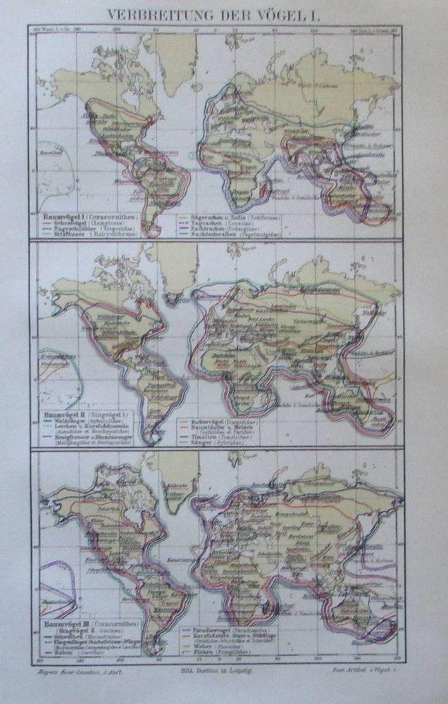 1897 Verbreitung der Vögel I. II. und III. - 3 alte Karte Lithografie old map