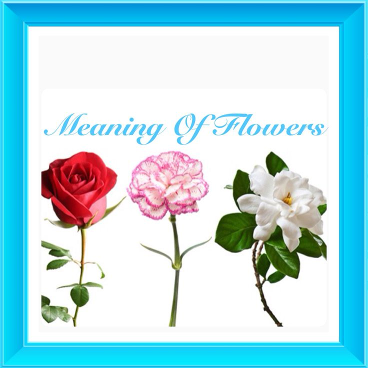 Wedding Flowers Meaning: 38 Best Images About Flower Meanings On Pinterest