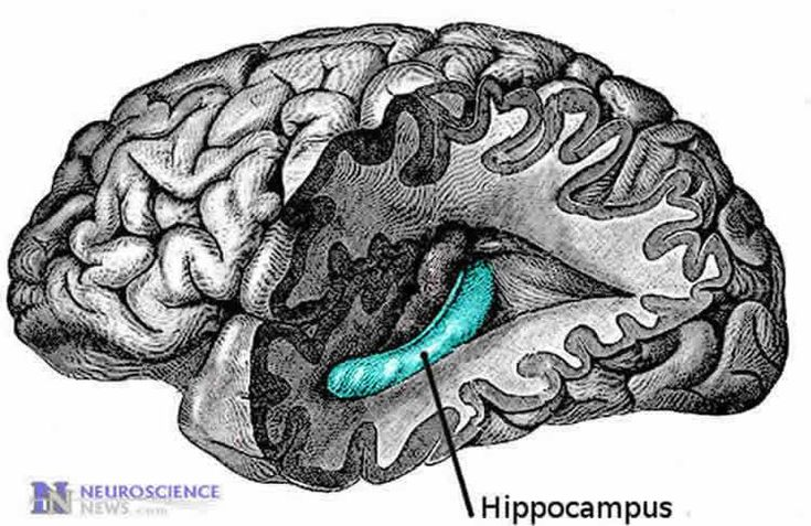 'Research by a group of scientists at the Department of Physiology, Yong Loo Lin School of Medicine, National University of Singapore (NUS Medicine) have discovered that a tiny brain region plays a critical role in the formation of social memory and interaction.' -   Potential Mediator for Social Memory Formation: