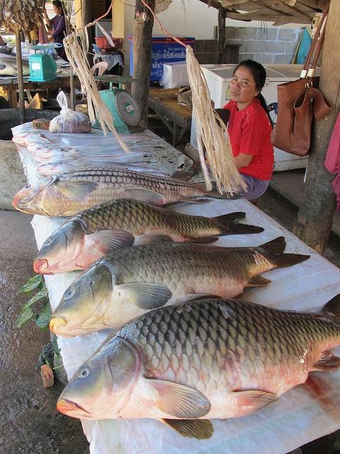 Carp at a fish market, Laos