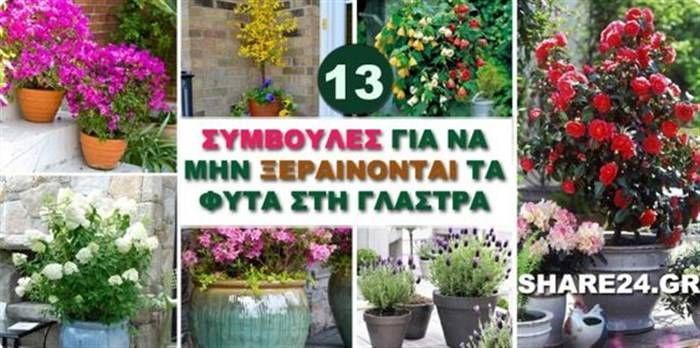 13 Συμβουλές Για να Μην Ξεραίνονται τα Φυτά στη Γλάστρα!  #Φυτά
