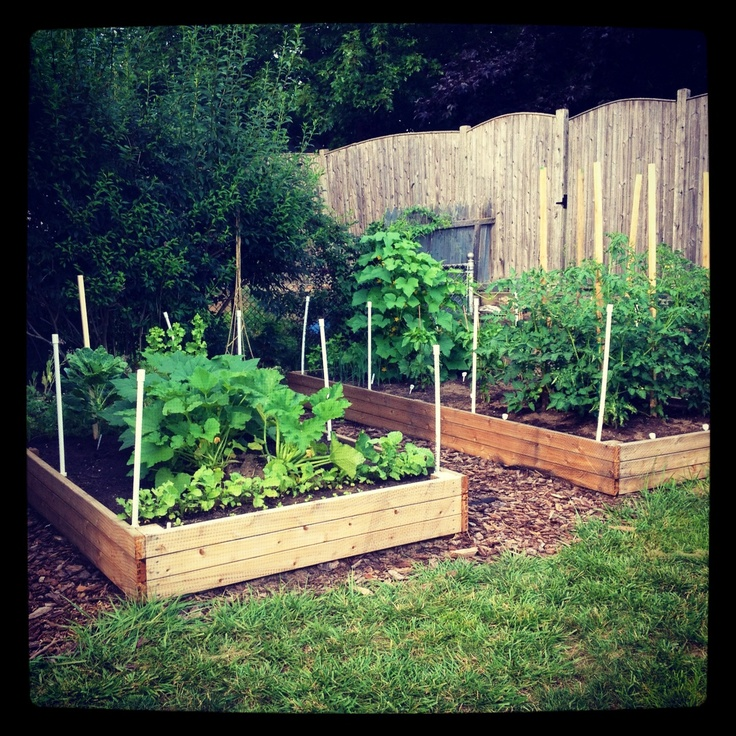 138 Best Long Thin Pretty Garden Images On Pinterest