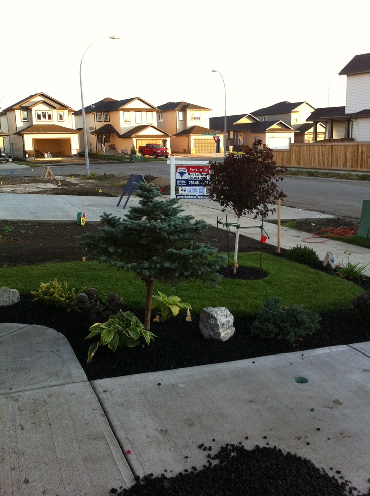 New landscaping 2012