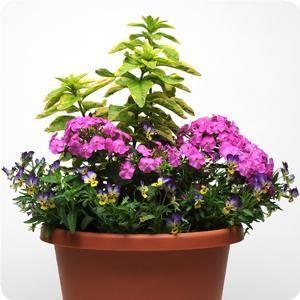 sweet website for all kinds of planter combos. ideas for full sun, part sun, shade, perennials.