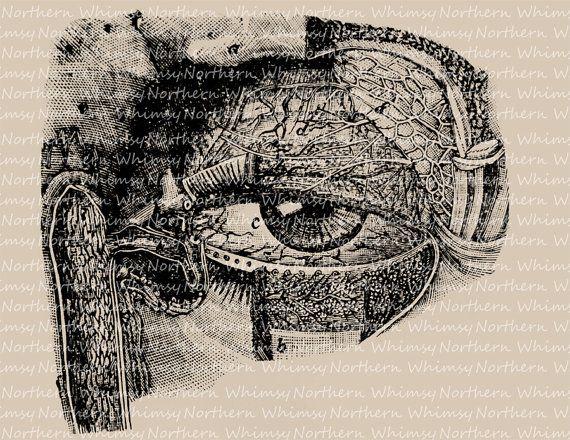 Eyeball Anatomy Vintage Clip Art - Digital Image – Printable Transfer - Steampunk Graphic Illustration – 1800's - instant download - CU OK