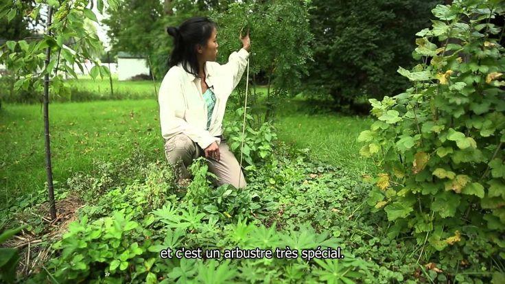 Concevoir son jardin et sa vie avec la permaculture (sous-titres français) - Les designers et formateurs en permaculture Bonita Ford et Sébastien Bacharach racontent comment ils utilisent les principes de permaculture pour concevoir leur jardin ainsi que d'autres aspects de leur vie.