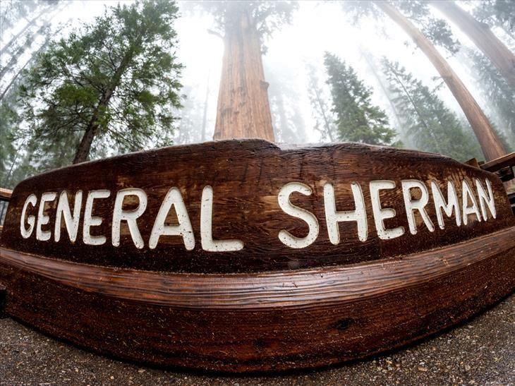 General Sherman Tree, Sequoia National Park, Kalifornie