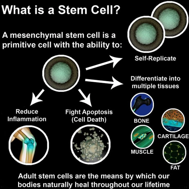 adult stem cell nutrition