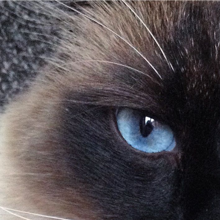Mr blue eyes !