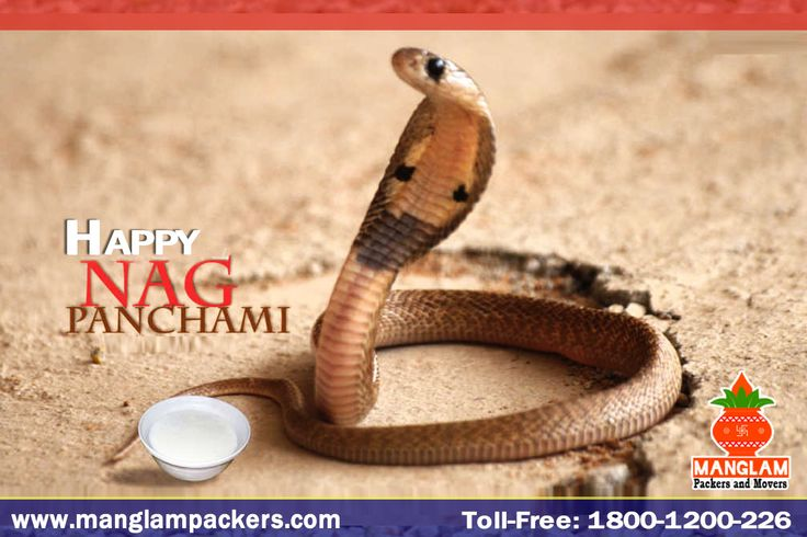 India celebrates #Nag #Panchami today. The festival is observed on the Shukla Paksha Panchami during Sawan month in the Hindu calendar. #Happy #Nag #Panchami http://manglampackers.com/