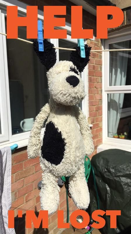 Lost on 14 Jun. 2016 @ St Johns Leisure Centre, Tunbridge Wells. My daughters favourite soft toy dog was lost yetsterday. He was her absolute favourite and she is so upset. He was last seen in the soft play area and then the cafe in St Johns Leisure Centre, he m... Visit: https://whiteboomerang.com/lostteddy/msg/kr35j1 (Posted by Gemma on 15 Jun. 2016)
