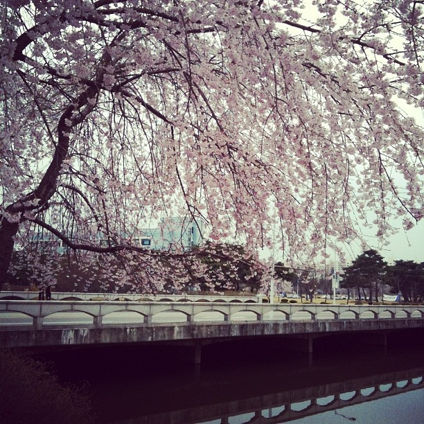 KAIST Duck pond!! (Daejeon, South Korea)